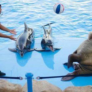 Дельфинарий-auratur.jpg