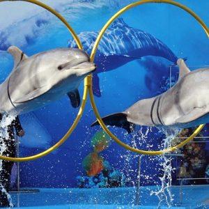dolphin_Egypt.jpg