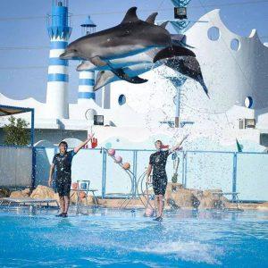 dolphins-show-hurghada.jpg